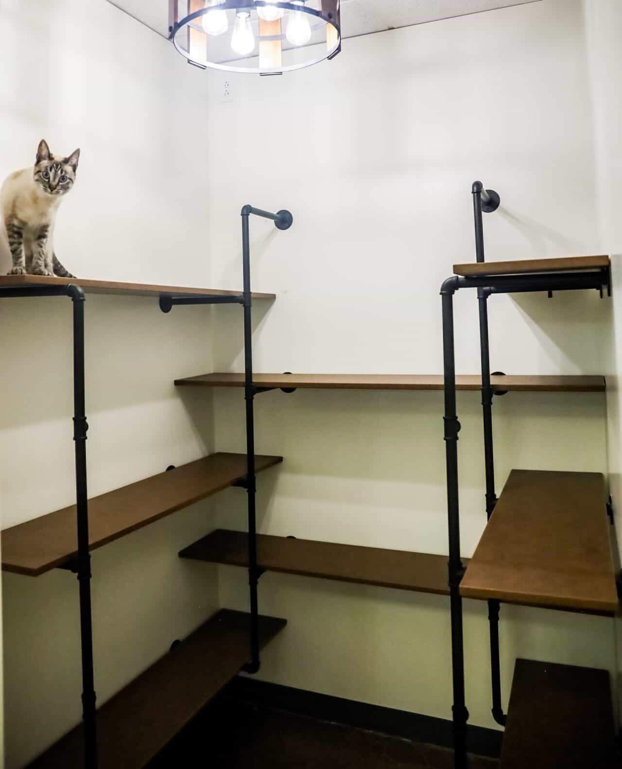 St. Charles multi-level cat condo
