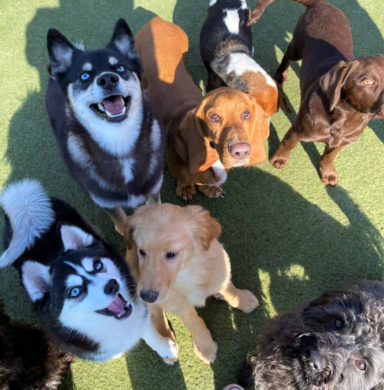 Petropolis pups playing with their best friends at daycare on Valentine's Day!